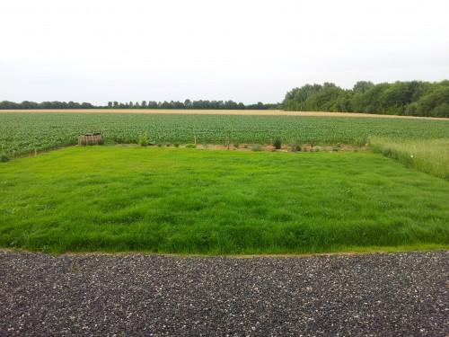 Unser Rasen am 28.06.2012